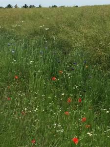 """Så er de her...De vilde blomster. Endnu engang tak til """"Peters Plæneservice"""" Vi nyder synet."""